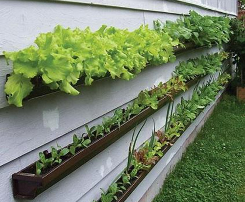 <p>Grow vegetables in gutters.</p>
